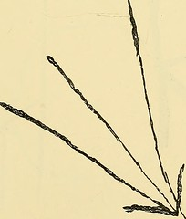"Image from page 132 of ""Phantasms of the living"" (1886)"