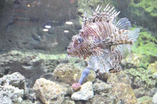 07_Georgia Aquarium