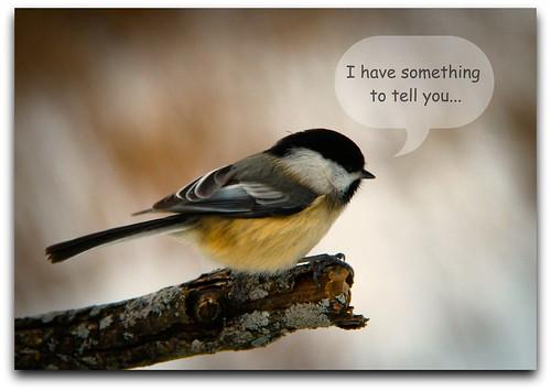 Little Birdie...
