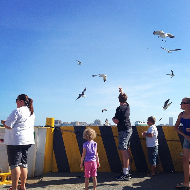 Feeding the seagulls off the back of the ferry. We even saw dolphins! #misspaisleygrace