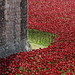 Ceramic Poppies Surround the Tower of London to Commemorate WWI