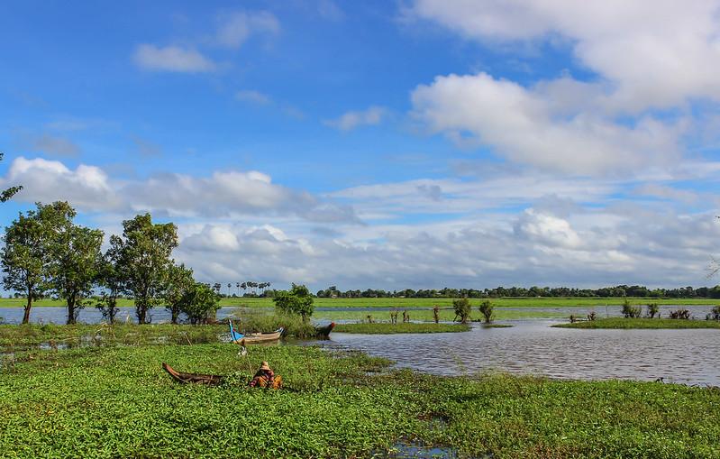 Paddy fields around Battambang.