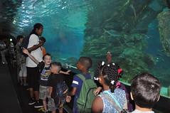 COEX Mall Aquarium Tour - Camp Humphreys, South Korea - 13 AUGUST 2014