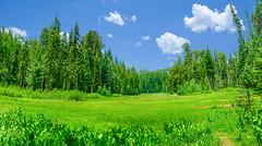Sequoia Crescent Meadow