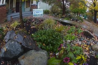 Ballard Rain Garden2