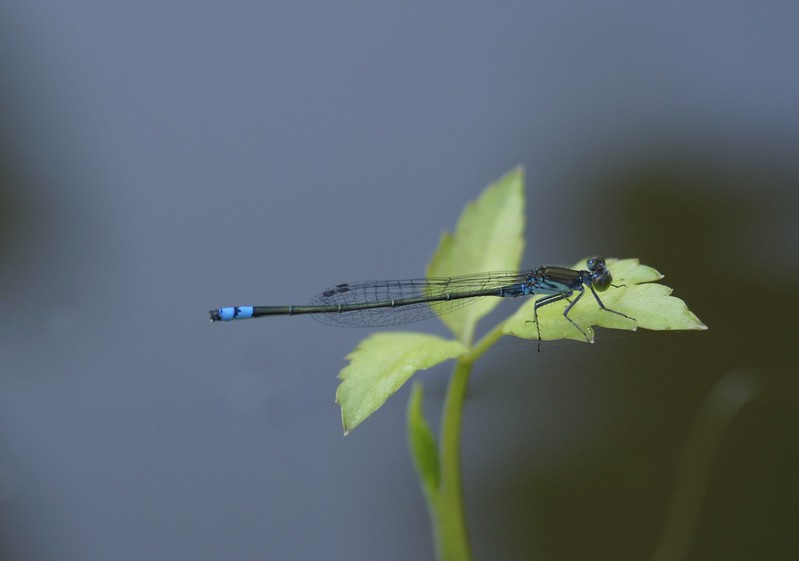 DragonFly collection 2014 Sumar