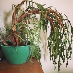 shrub(0.0), flower arranging(0.0), flower(0.0), floral design(0.0), floristry(0.0), ikebana(0.0), bonsai(0.0), twig(0.0), flowerpot(1.0), branch(1.0), leaf(1.0), herb(1.0), houseplant(1.0), flora(1.0),