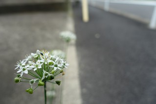The flowers in commuting 2014/09 No.1.