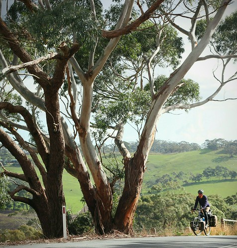 Cycling under gum trees