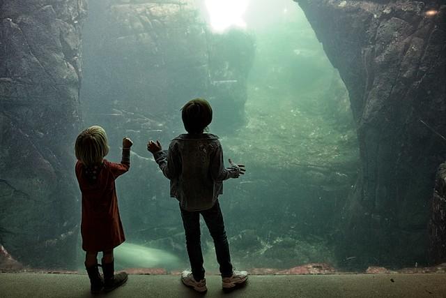 Children Fascination