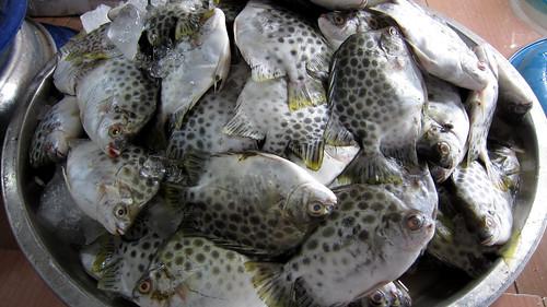 Koh Samui Seafood Market