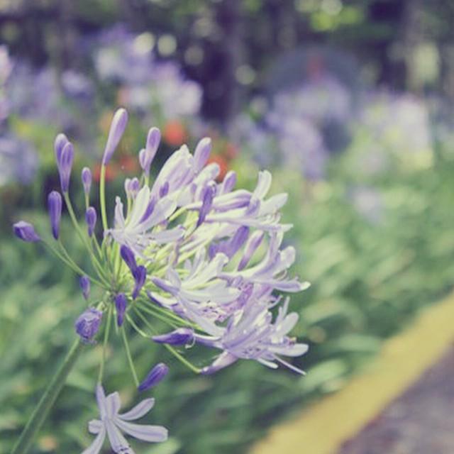 #desafioprimeira 13- Natureza: flores.