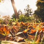[168] Hello Autumn?!