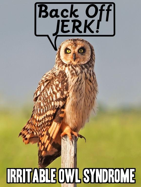Owl joke, best, BrianMc, MyWay2Fortune.info
