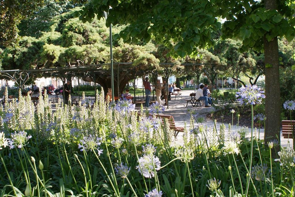Agapanthus dans le jardin de Principe Real de Lisbonne.