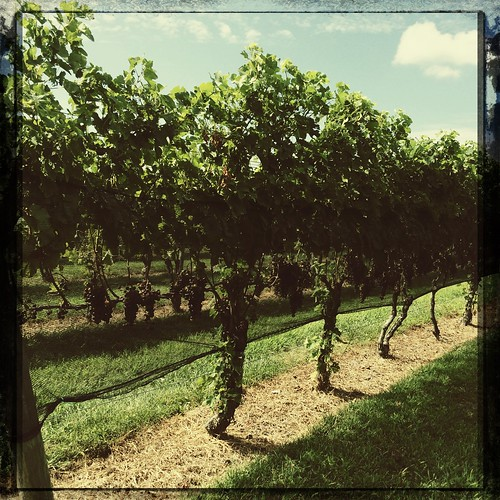 Channing's Daughters Vineyards, Long Island