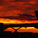Sunrise at the airport - London Gatwick (EGKK/LGW)