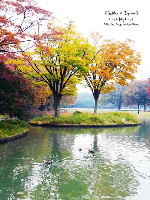 日本東京景點澀谷區代代木公園賞楓葉 (19)