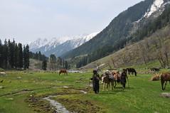 Kashmir spring trekking