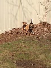Winston & Harley