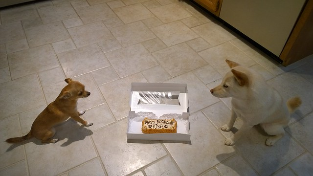 Kira and Penny staring at cake
