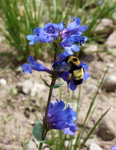Pollinators By The Gardening Nana Center Grove