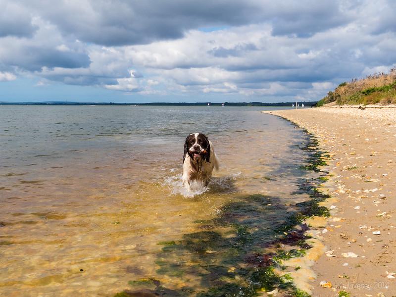 Max on Hamworthy Beach