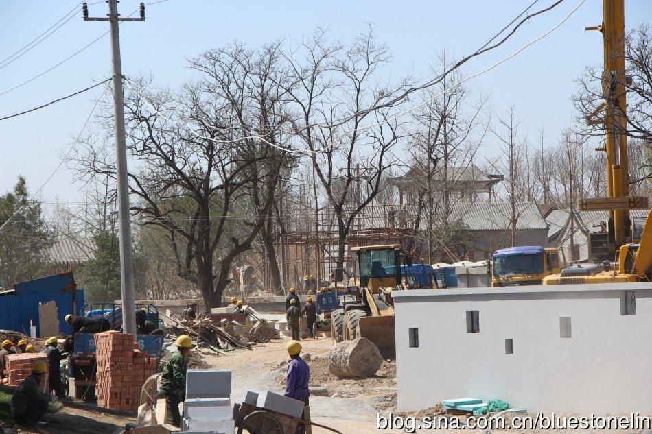 園林博覽會期間,有不少疑似外地移植大樹。(圖片來源:林吉洋)