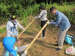 搭瓜棚的志工合作用鐮刀鋸竹竿