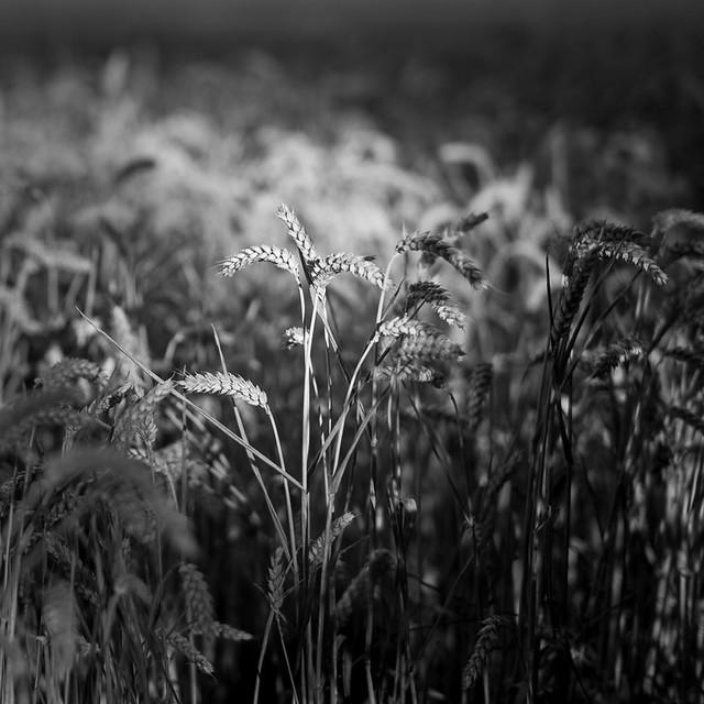 Light on the crop