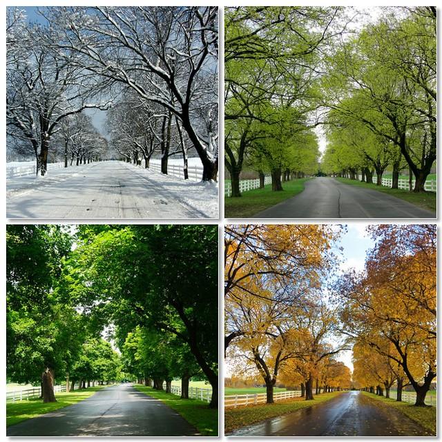 4 Seasons - tree-lined drive