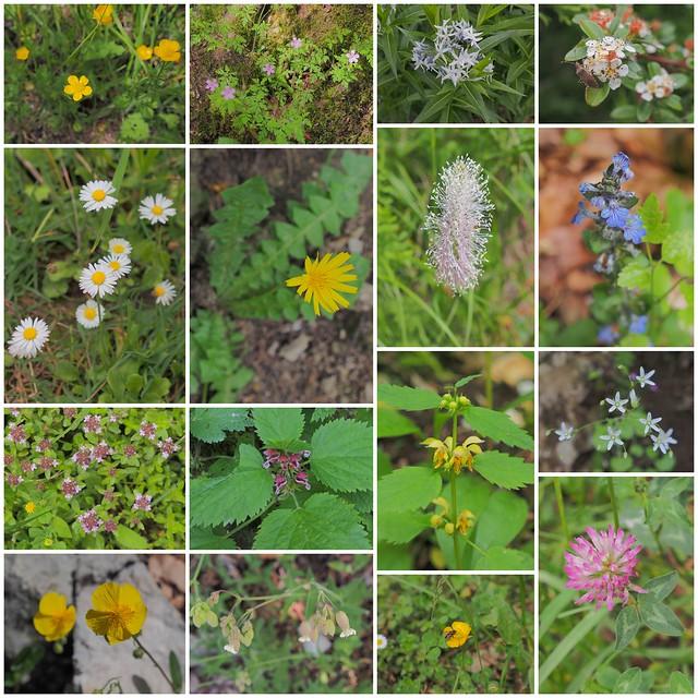 十六湖國家公園的植物