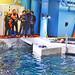 Maya Dive Experience