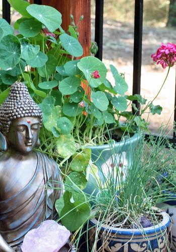 buddhapots