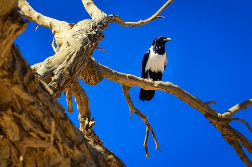 Oiseaux du désert