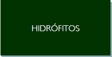 hidrófitos