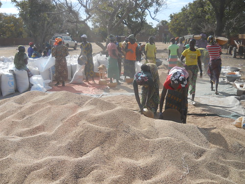Women process cereals in Mali