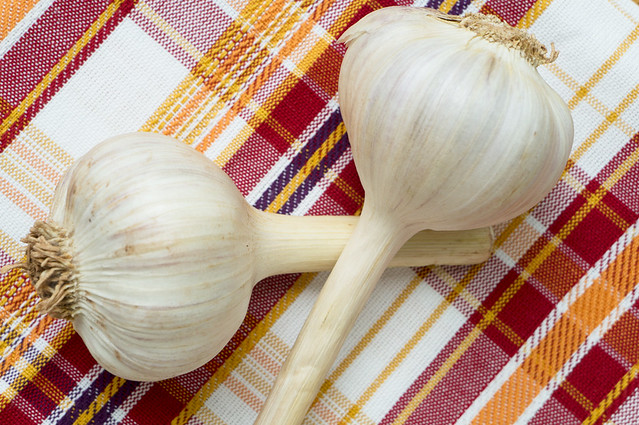 garlic with stems