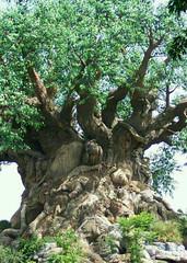 Ugly, big tree