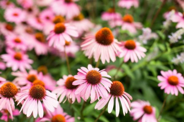 High Line Flowers
