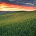 Sunrise amongst the Wheat Fields by Della Huff Photography