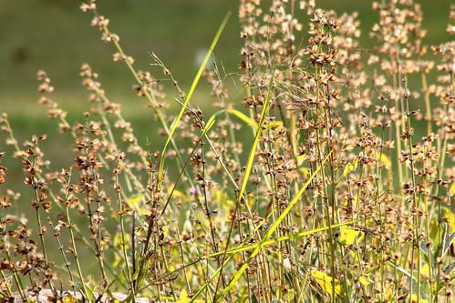 flowers light summer sunlight nature grass garden spider spiderweb