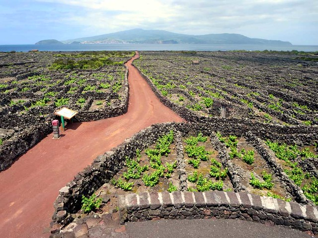 Centuries Old Vineyards