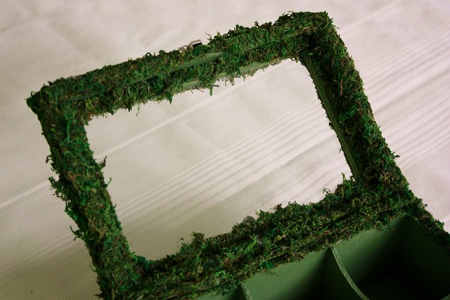 moss-covered-display-box