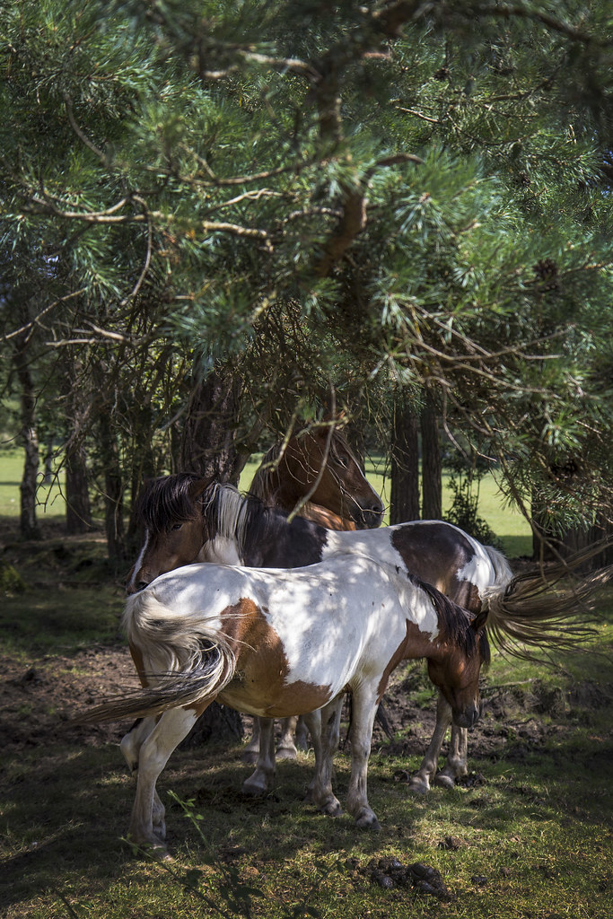 horses-under-shade