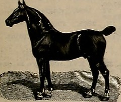 "Image from page 222 of ""Breeder and sportsman"" (1882)"