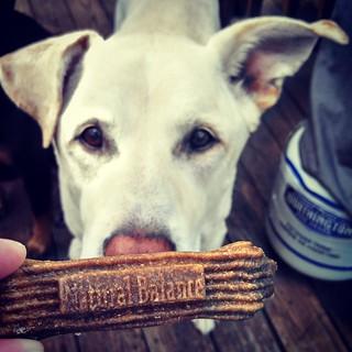 We're working on a @naturalbalanceinc dental treat review for this week! @chewy #NaturalBalance #dogtreats #instadog #dogstagram #seniordog #mutt #ilovemyseniordog #ilovebigmutts #ilovemydogs