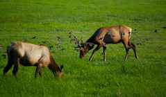 North American Wildlife 62