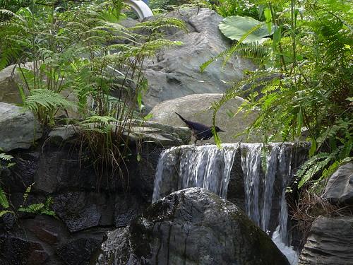 大阪根園區小池塘