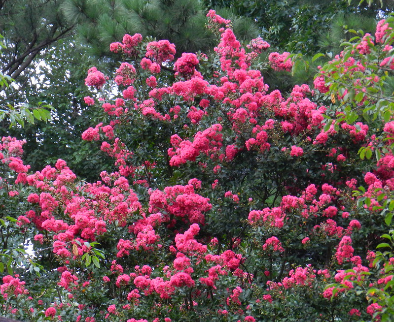 today's flowersDSCN4894